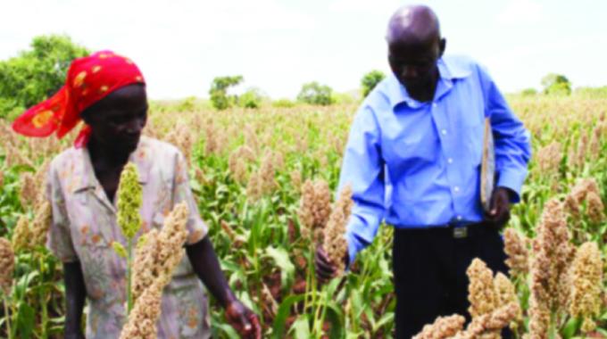 Traditional grains drive now making sense