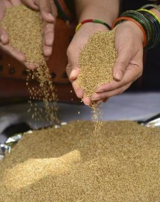 United Nations declares 2023 International Year of Millets
