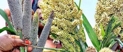 APEDA to study millets value chain for exports as offtake revives across the globe