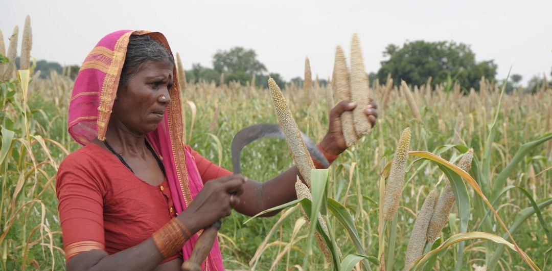 Shift from rice to millets, save 50 million tonnes of greenhouse gas emissions by 2050: Report