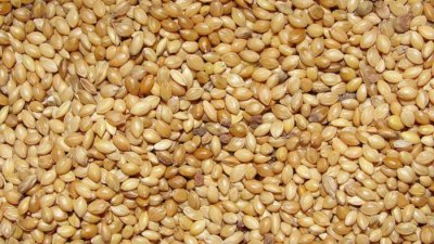 Here's why you should consume superfood foxtail millet