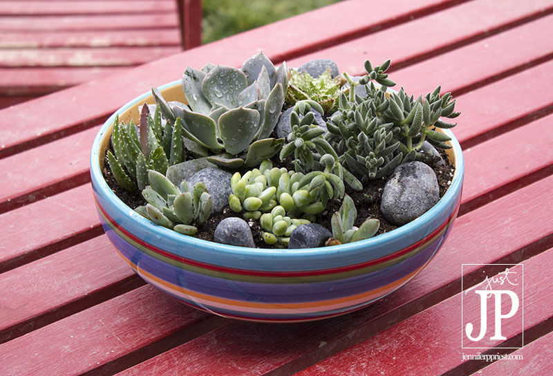 DIY Succulent Garden using a bowl form the thrift shop - plus tips on making this for under $20!