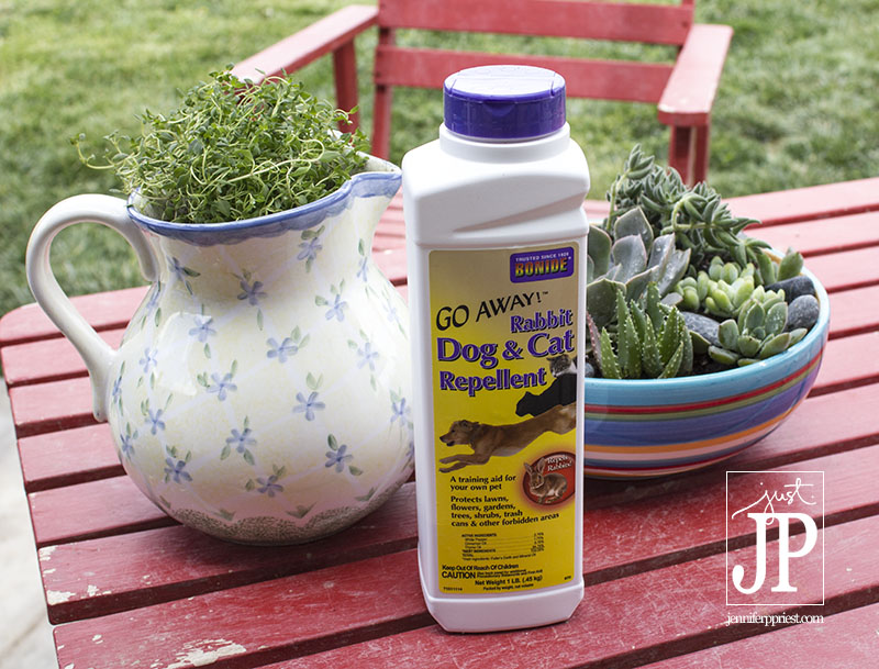 Use bonide cat and dog repellent to keep dogs and cats away from your plants naturally - its made with pepper.