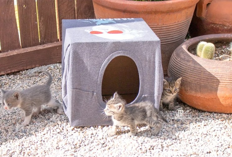 How to make a CHEAP DIY cat house! Plus SAVE the Kitties … #CatsForFreedom