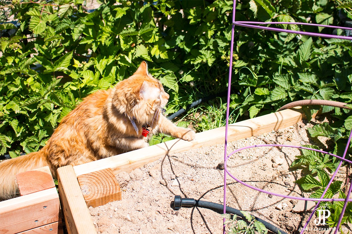 a backyard adventure for kitty june 15th national u201ctake your cat