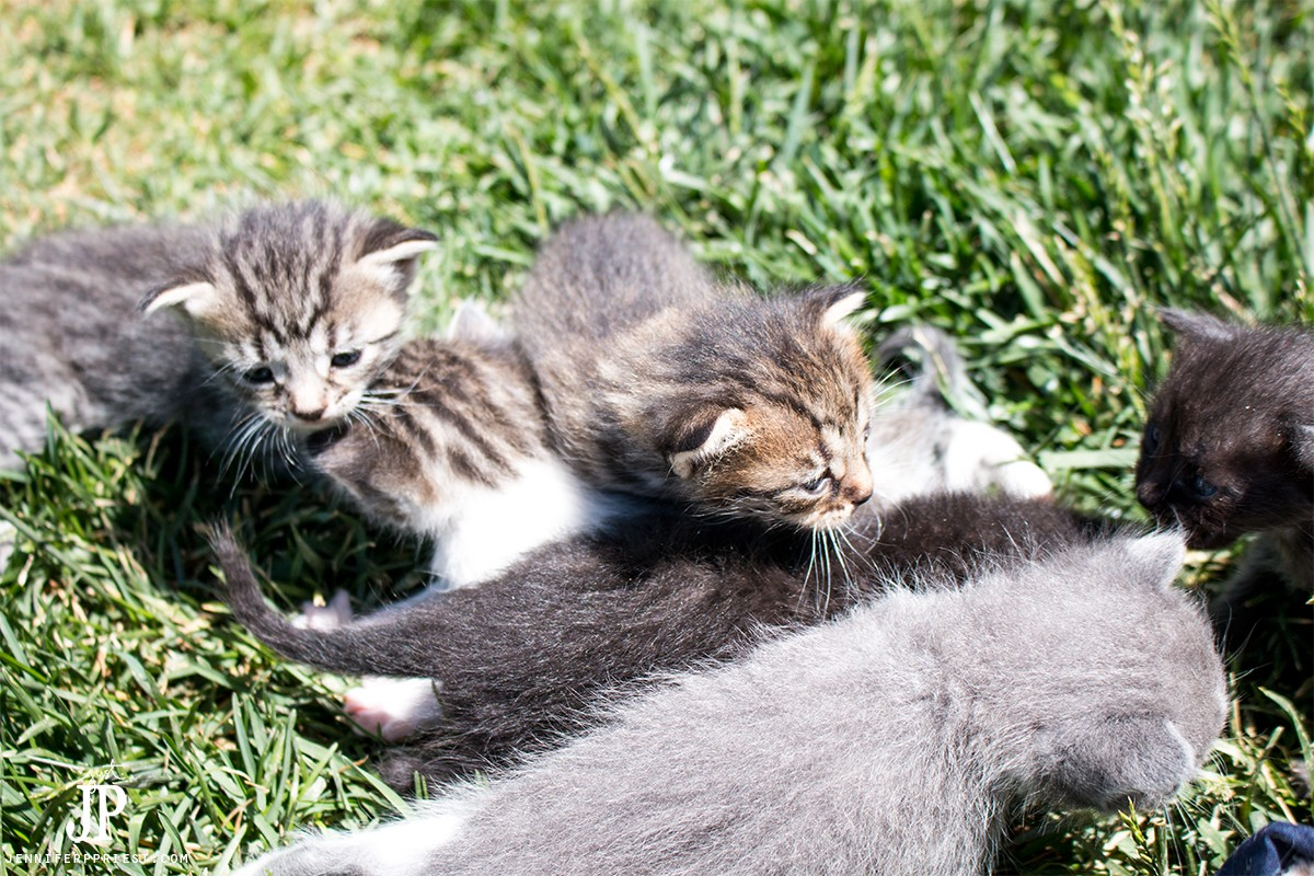 Watch how our kittens have an adventure! #MyGreatCat @ProPlanCat [AD]