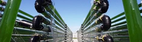 Del Agua al Cielo: Algas producen combustible de aviones