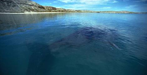Por las ballenas se posterga un parque eólico marino