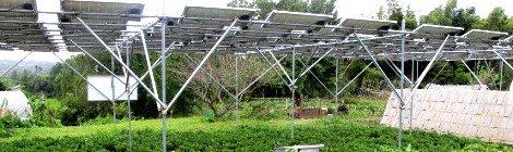 Paneles Solares y Agricultura conjunta