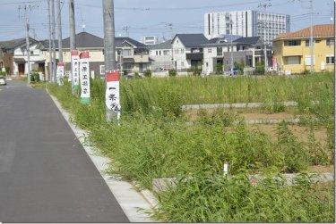 雑草の生えている土地と除草剤をまいた土地はどっちが良い??