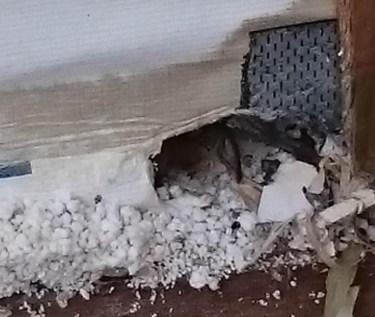 【閲覧注意】誰にでも起こる!一条工務店の家にネズミやコウモリ侵入し放題の欠陥?クレームですか?仕様です。。。