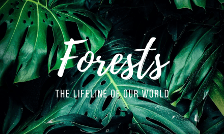 Forests: the lifeline of our world