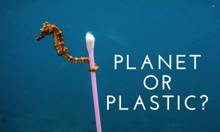 Planet or Plastic?