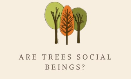 Are trees social beings?