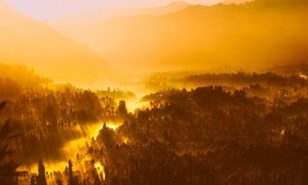 Indonesia rewarded for deforestation efforts: a $56M grant from Norway