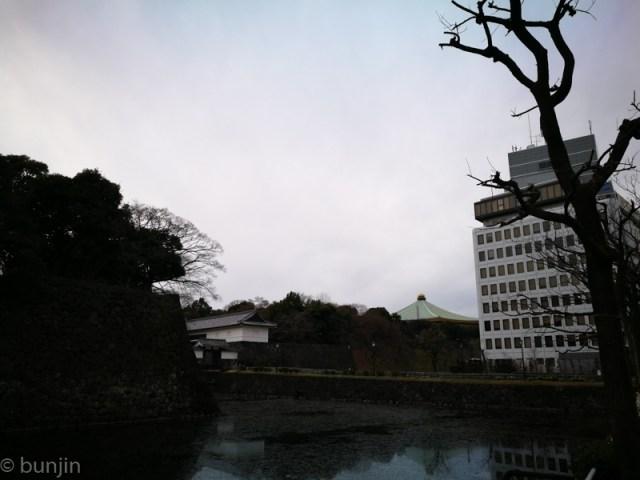 タマネギ遠景
