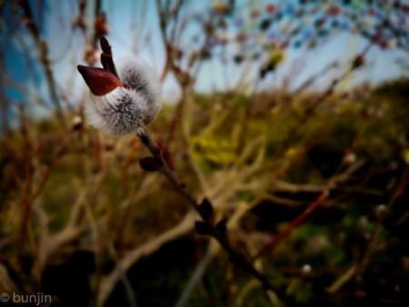 春、芽吹く