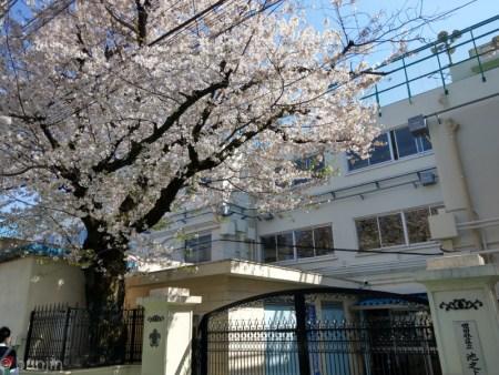 始業式の頃は葉桜か