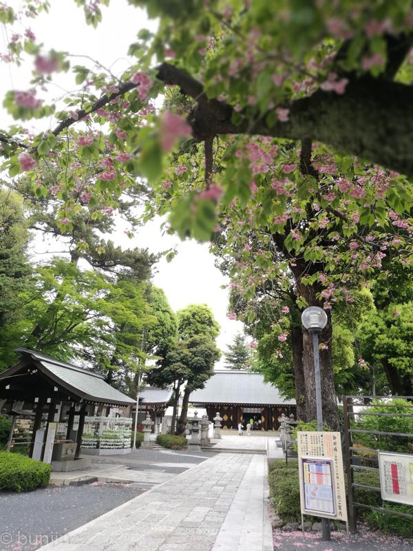 八重桜越しの松陰神社