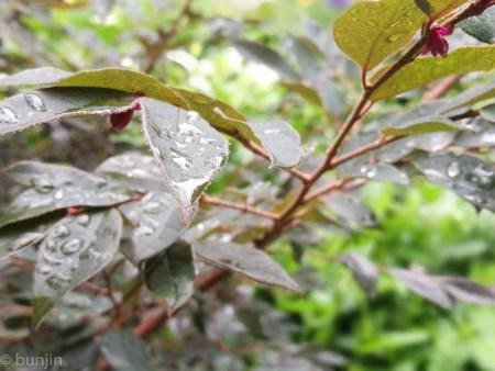 Rainy season TSUYU