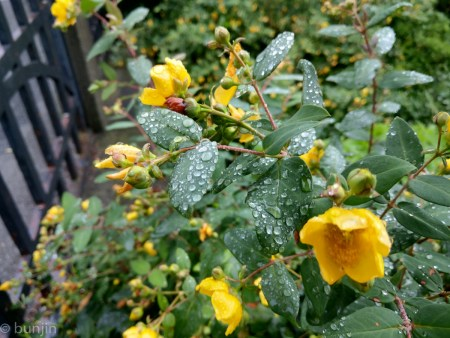 Rainy flowers and leaves