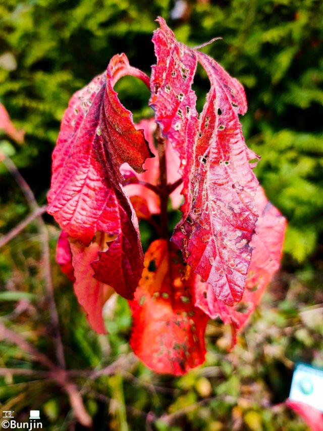 Worm-eaten leaves