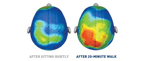 En este (estudio) observamos la activación de regiones del cerebro después de 20 minutos de caminata.