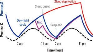 Existe una presión homeostática en nuestra fisiología a las 6-8 horas de despertarnos.