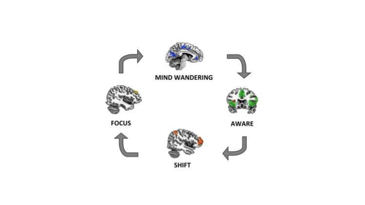 Divagación y red neuronal por defecto