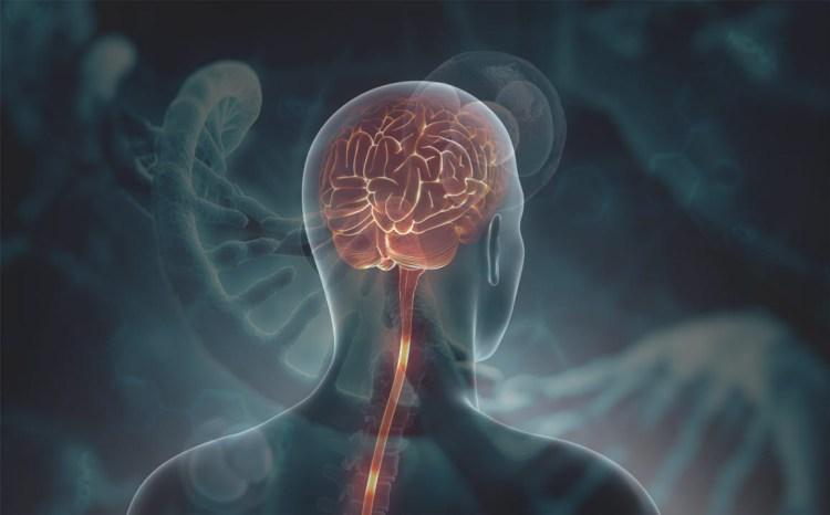 Desmintiendo los Mayores Mitos sobre el Cerebro