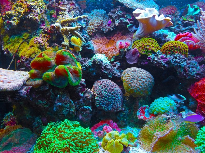 coral-567688_960_720 2