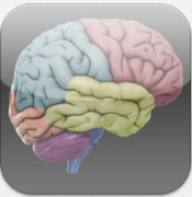3D Brain00