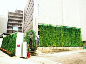 「緑のカーテンコンテスト」で団體部門グランプリを受賞 ...