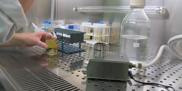 Repiquage de bactéries en bouillon nutritif (laboratoire de bactériologie)