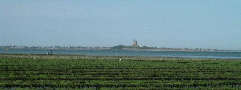 Parcs à huîtres sur la côte est du Cotentin au printemps (@SMEL)