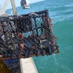 Le recyclage des casiers de pêche