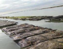 Parcs ostréicoles en Normandie.