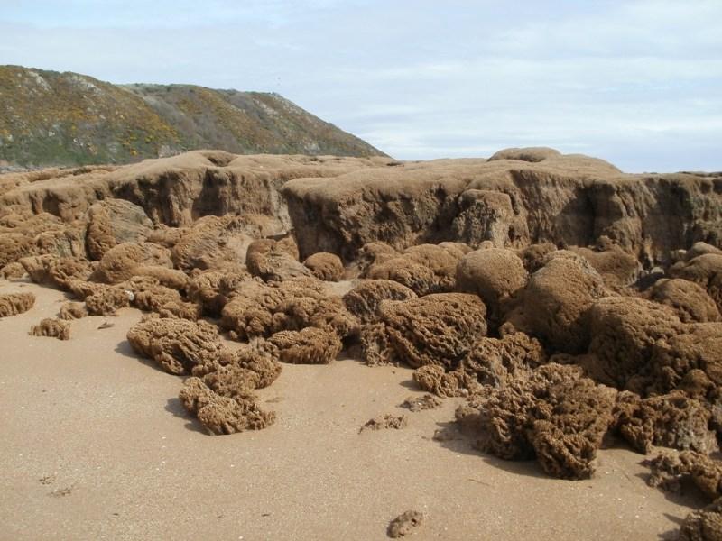 Récifs d'hermelles à Champeaux, Manche (@SMEL)