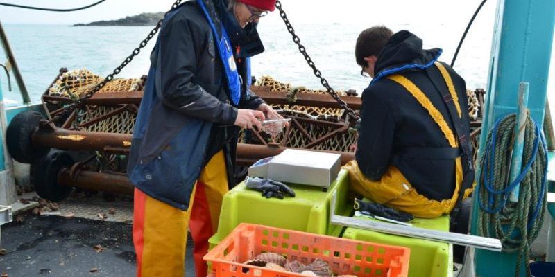 Mesures de coquilles Saint-Jacques à bord du Rocalamauve (SMEL)