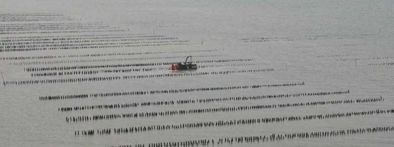 Vue aérienne de concessions mytilicoles (photo Loïc Maine).