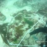 Le SMEL plonge sur les algues.