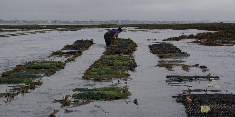 Accueil de l'expérimentation sur la concession de Blainville sur Mer (@SMEL)