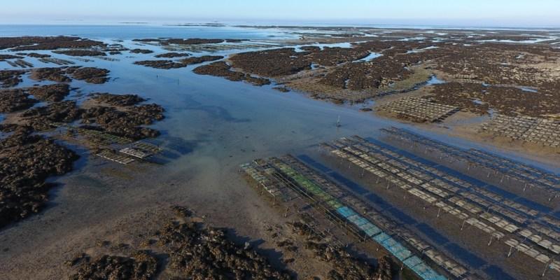 Parcs ostréicoles de Blainville sur Mer, au premier plan, la concession utilisée par le SMEL (@SMEL)