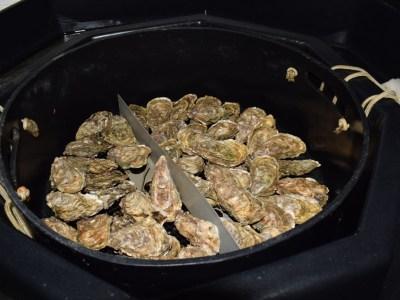 Huîtres à marée basse dans le SYCAMAR