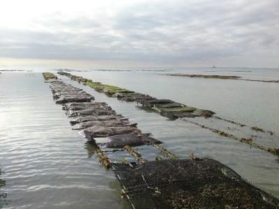 Concession accuaillant les suivis de mortalités à Blainville / Mer (@SMEL)