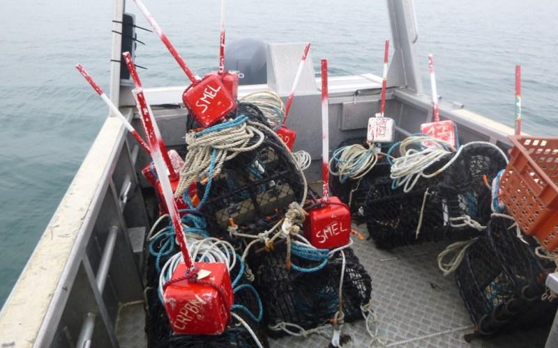Campagne de pêche scientifique à bord de  la vedette du SMEL, l'Helcyon II (@SMEL)