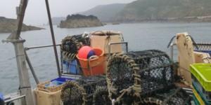 Le SMEL suit les populations de crustacés dans le Raz Blanchard