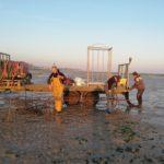 Développement de l'ostréiculture en Seine-Maritime.
