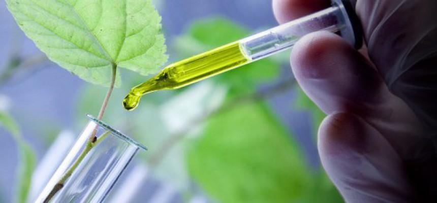 Cellule Staminali Vegetali nei Cosmetici
