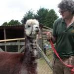 Alpaca and Matthew Schiaefli IMG_0441